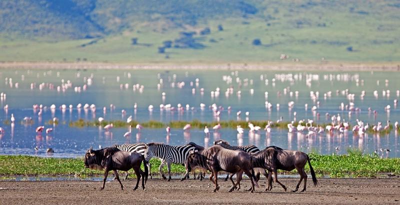 Group Tanzania Safari