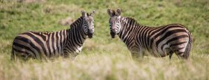 Join Shared Safari Tanzania