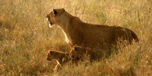 Camping Safari in Tanzania short