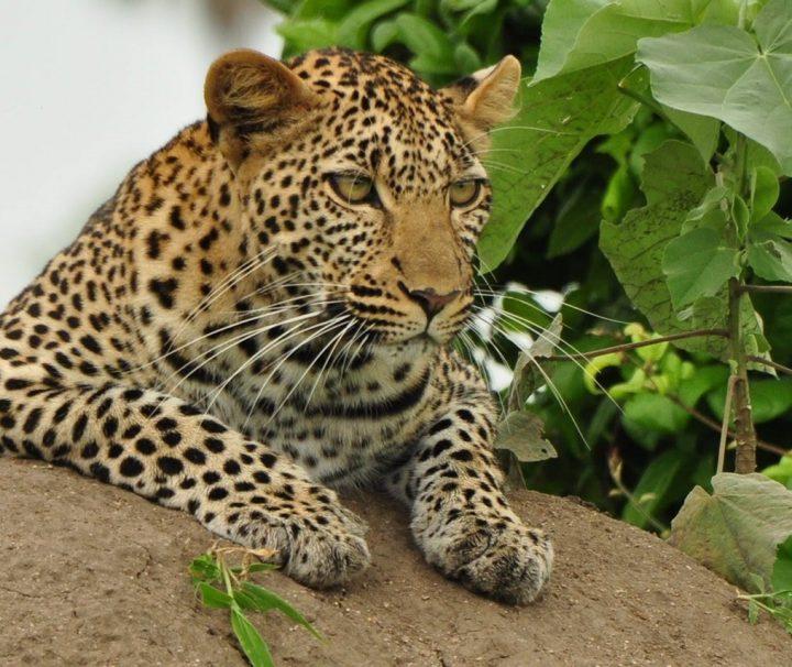 Short Camping Safari Tanzania