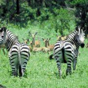 short safari Tanzania Camp