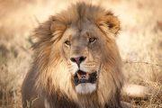Camping Safari Tanzania Short