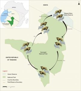 wildebeests Migration calendar route