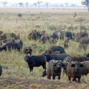 Dar Mikumi Safari 2 days