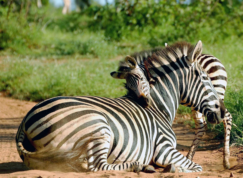 14 Days Family Safari & Zanzibar Beach