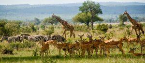 Mikumi Park Tanzania