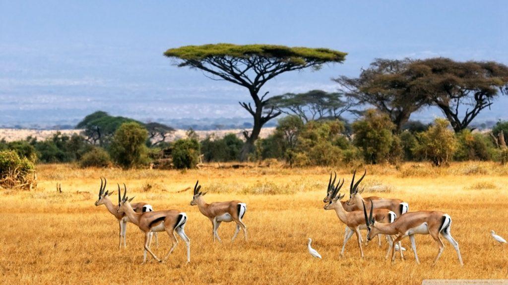safari from zanzibar