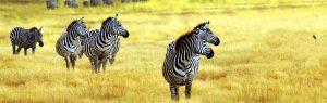 safari tour starting tanzania