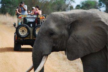 2 days safari mikumi from Zanzibar