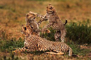 2 days safari Tanzania lodge