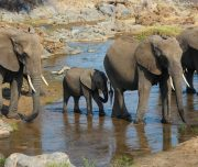 elephants safari tarangire