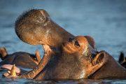 8 days luxury safaris Tanzania