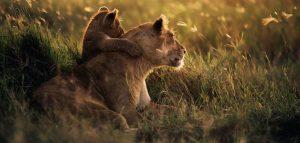 2-day safari Tanzania