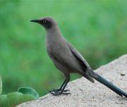 birding safari tarangire