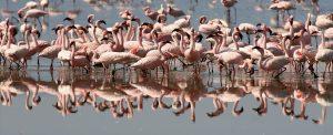 Lake Natron Safari Tanzania