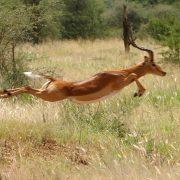 honeymoon safari Tanzania 2 weeks