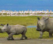 2 days Safari Tanzania Ngorongoro rhinos