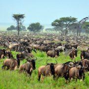 honeymoon serengeti