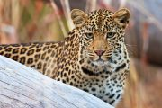 safari Tanzania honeymoon