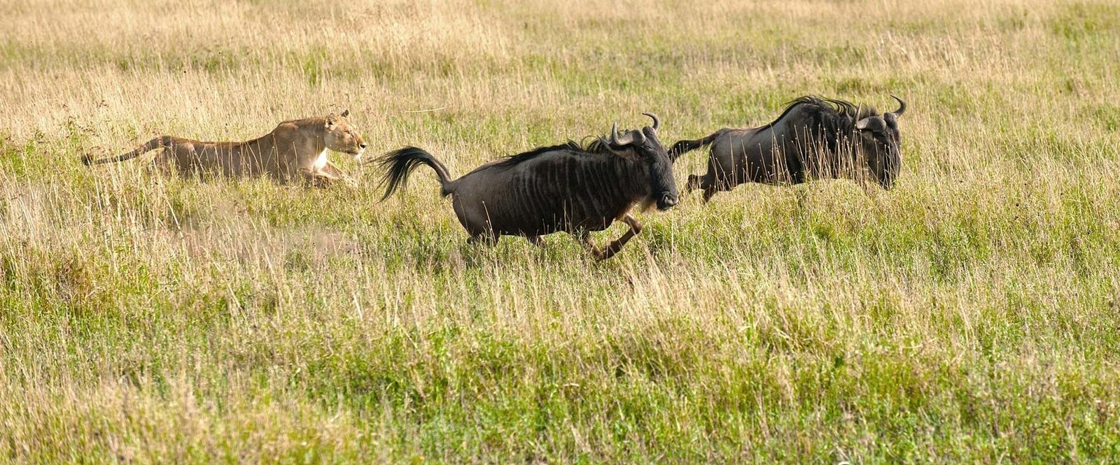 5 Day Tanzania safari luxury