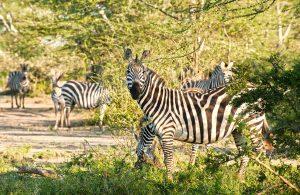 concession fees Tanzania