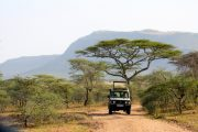 Game drives Tanzania