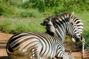 Safari Tanzania Five Days