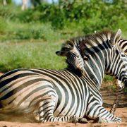 Safari Tanzania Five Days