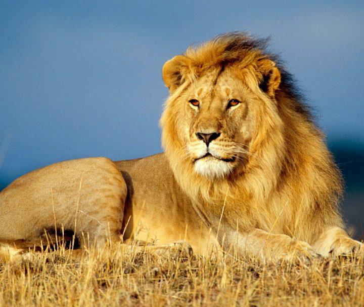 4 day Tanzania safari affordable lodge