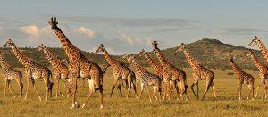 4 days affordable Tanzania safari budget