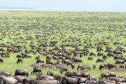 affordable safari Tanzania 4 days