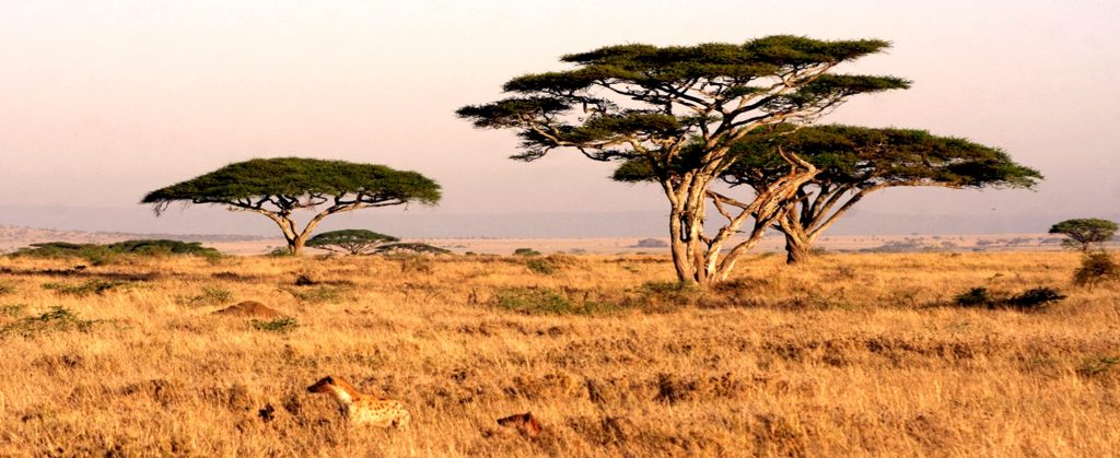 Serengeti Scenery landscape