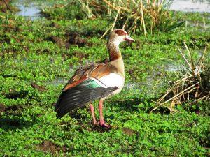 lake Manyara birds