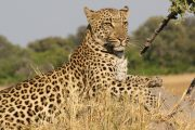 3 days safari from Arusha
