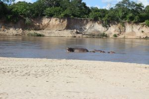 Southern Tanzania Safari Selous