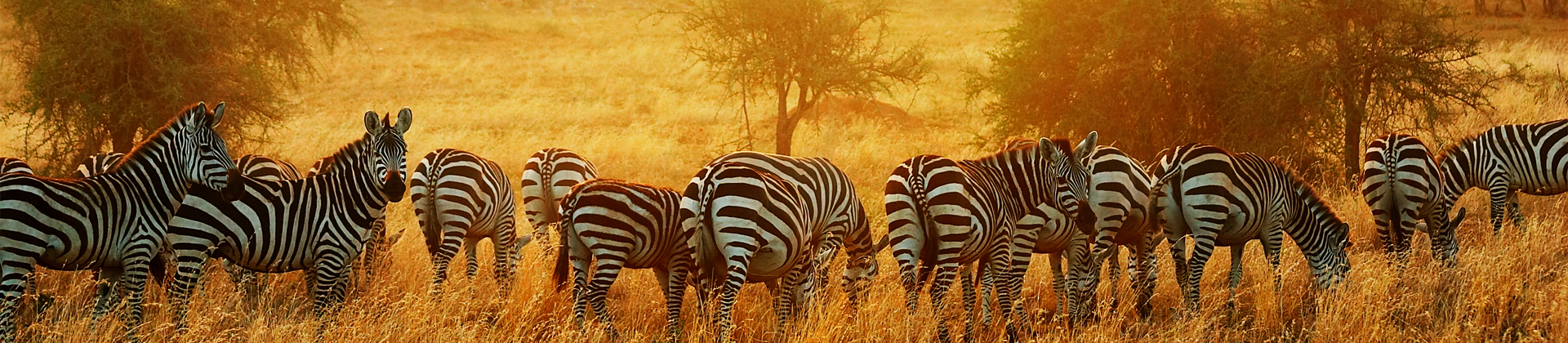 Tanzania Safari Holidays with Prices 2019 / 2020