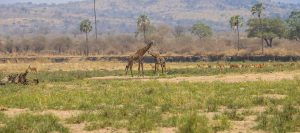 Southern Tanzania Safari 8 Days