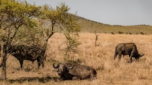 Selous Ruaha Safari