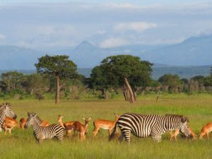 2 day safari from Dar es salaam Mikumi