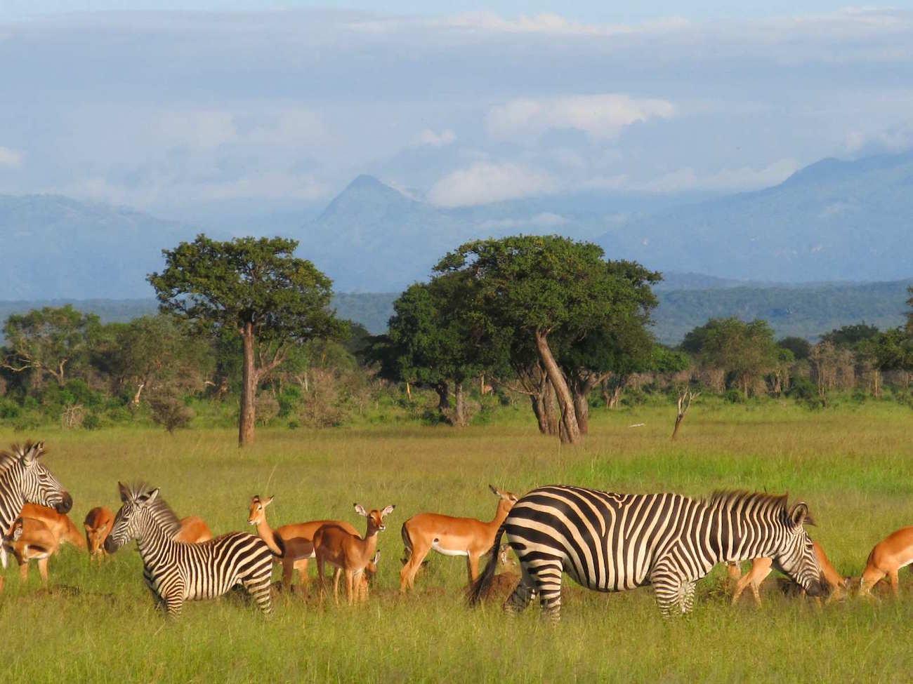 2 day safari from Dar es salaam Mikumi