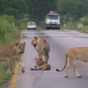2 day Safari from Dar es Salaam to Mikumi National Park