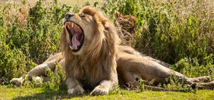 e visa Tanzania safari