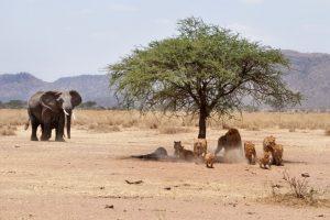 tanzania wildlife safari camping