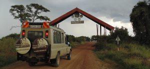 Calving MIgration Safari Serengeti Ndutu