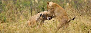 six days Tanzania safari
