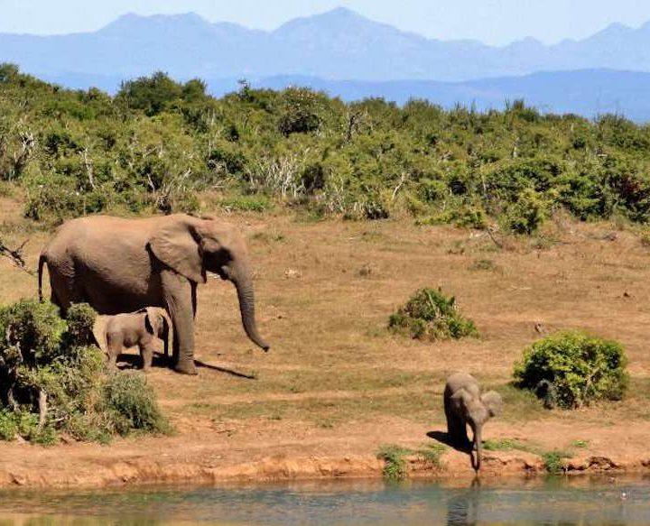 3 day safari Mikumi from Zanzibar