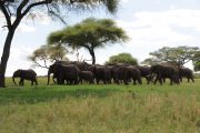 3 day safari Zanzibar elephants