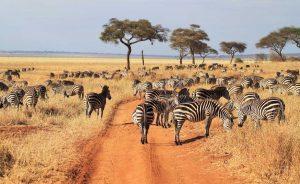 3 Days Tanzania Safari starting Zanzibar