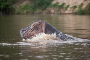 3 days selous safari from zanzibar island