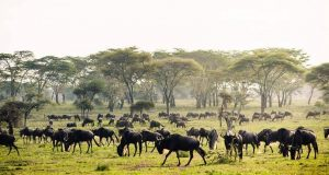 4 days safari zanzibar